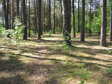 Лес на территории