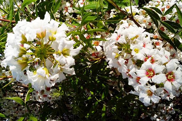 Парк весной. Много цветочков