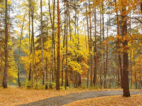 Осень, территория
