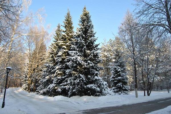 Зима, территория